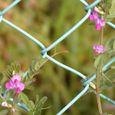フェンス:カラスノエンドウ-陽春