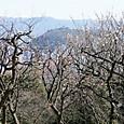 梅園から望む松山城